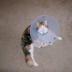 Big cone, revisited