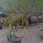 Cactus obsession