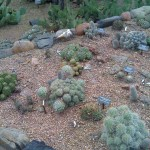 More little cacti!