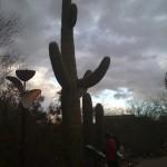 Saguaro of dOOm