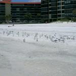Aggressive darty little birds on the beach.