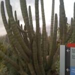 Sturdy cactus