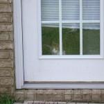 Curious cat!
