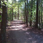 Much more manageable trail