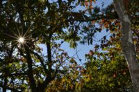 Peeking Up Through the Trees