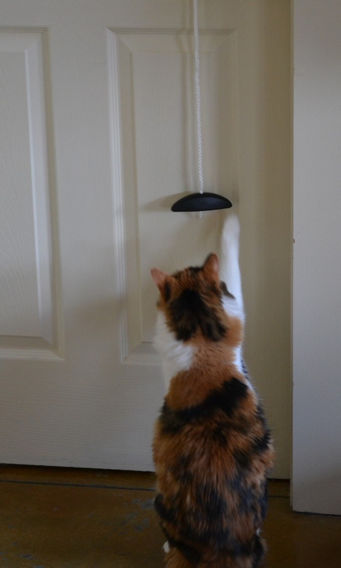 Jackie stretching up to play with the pulley on my door.