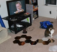 The hexagonal mirrors, laid out on the floor in a pattern, along with Greg-the-cat.
