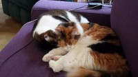 My two cats curled up together, sleeping